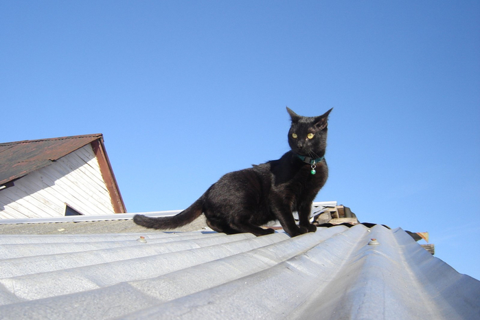 black-cat-roof-1351530 (700x466, 241Kb)