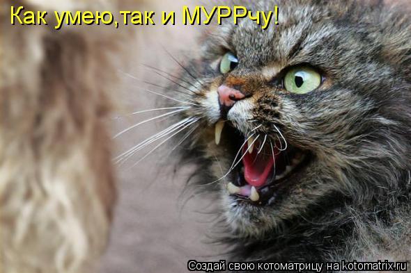 kotomatritsa_Dg (590x393, 156Kb)