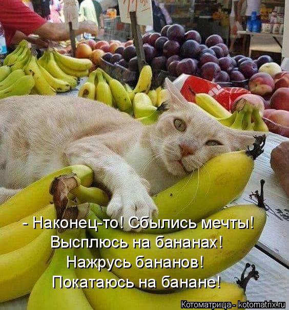 kotomatritsa_i (564x605, 313Kb)