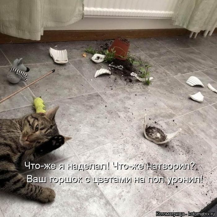 kotomatritsa_o (700x700, 391Kb)