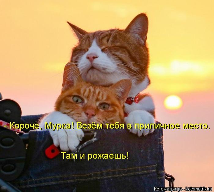 kotomatritsa_w (700x630, 330Kb)