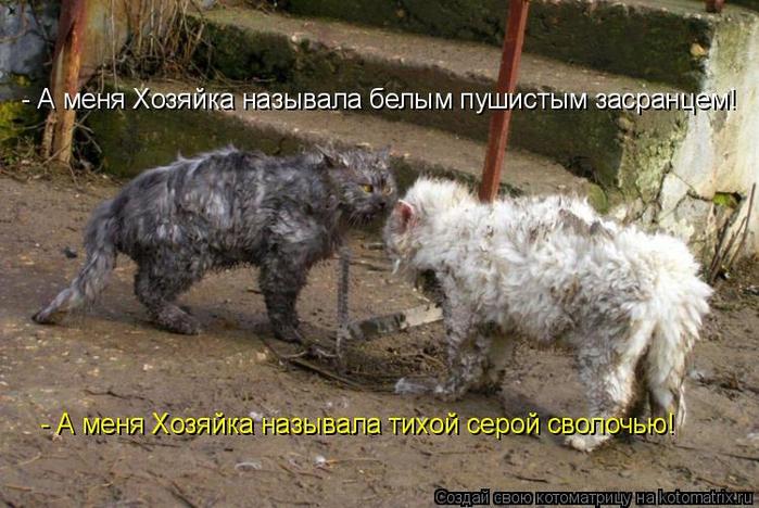 kotomatritsa_ZU (700x468, 376Kb)