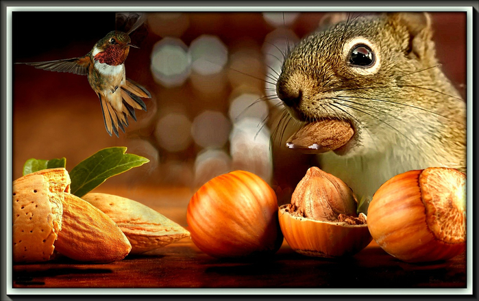 the-squirrel-618957_1280 (700x440, 354Kb)