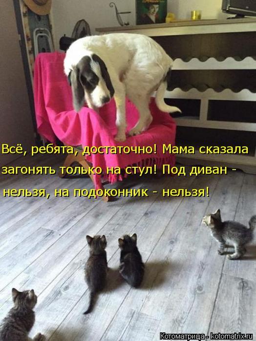 kotomatritsa_g (1) (524x700, 358Kb)