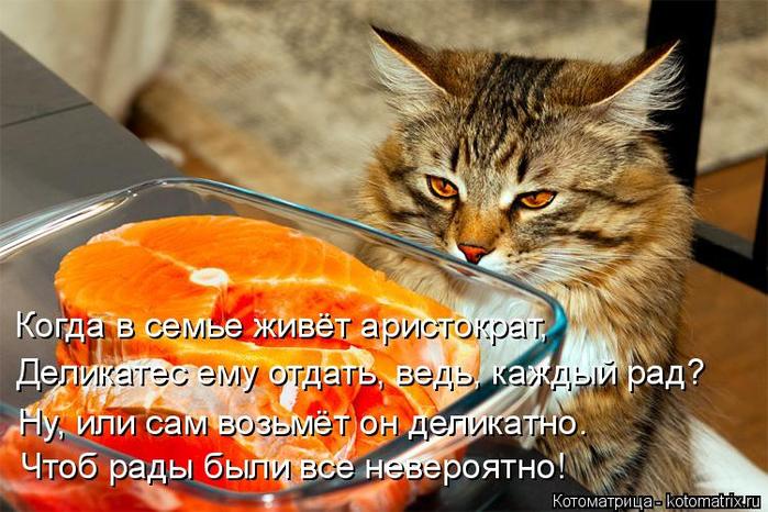 kotomatritsa_O (700x466, 418Kb)