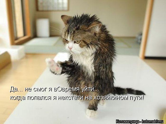 kotomatritsa_r (700x525, 185Kb)