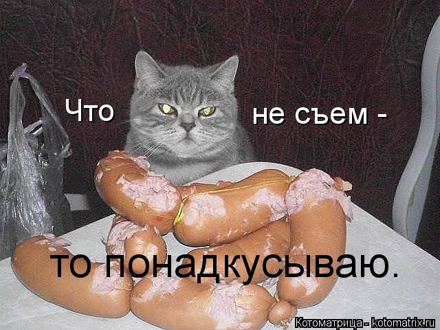 kotomatritsa_Bi (640x480, 199Kb)