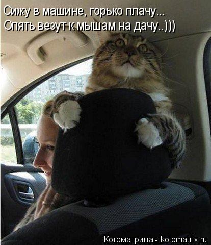kotomatritsa_E (414x480, 130Kb)