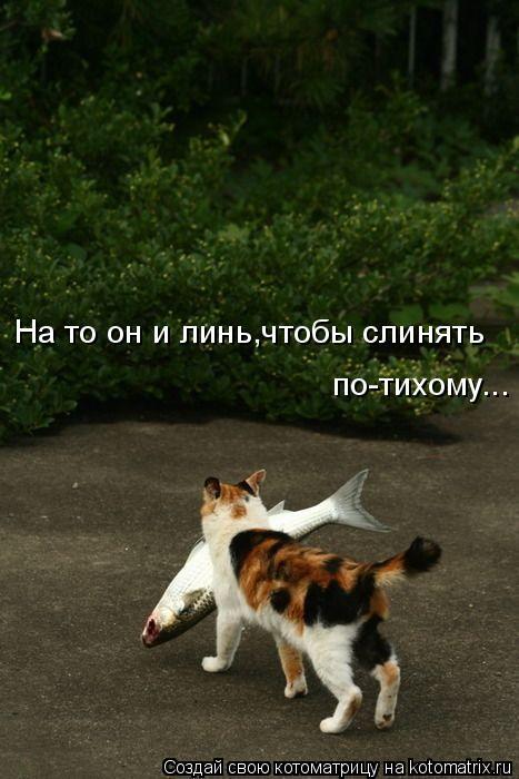 kotomatritsa_O (467x700, 211Kb)