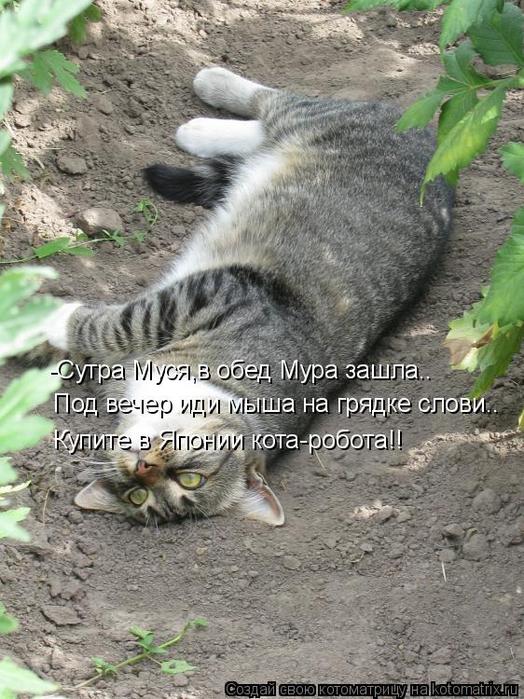 kotomatritsa_u (524x700, 385Kb)
