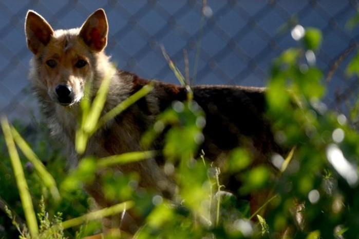 143496451 082818 0752 1 В России участились случаи нападения животных на людей