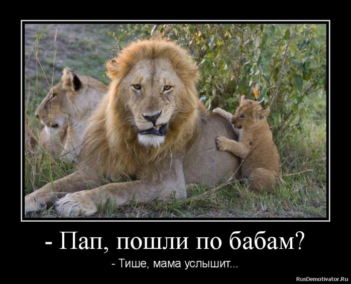 Анекдоты Про Львов