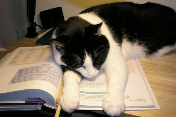 school cat (600x400, 107Kb)