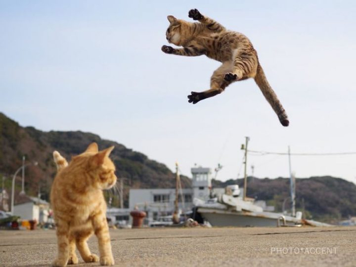 ninja-cats-photography-hisakata-hiroyuki-59f19a0f3fe8d__880-720x540 (700x525, 213Kb)