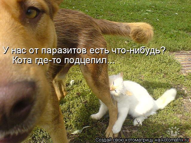 kotomatritsa_- (1) (640x480, 337Kb)