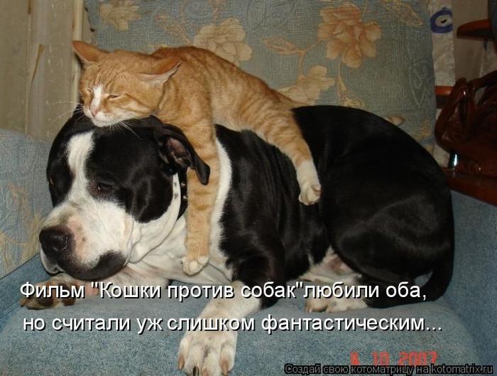kotomatritsa_1 (700x529, 339Kb)