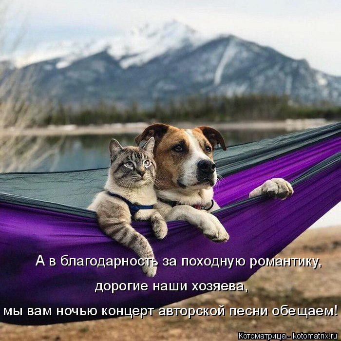 kotomatritsa_o (2) (700x700, 355Kb)