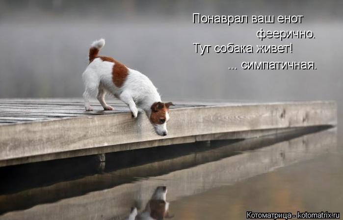 kotomatritsa_t (700x448, 176Kb)