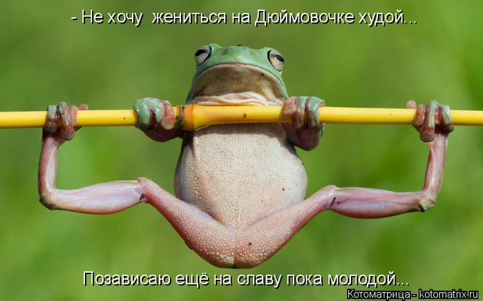 kotomatritsa_b (700x436, 251Kb)