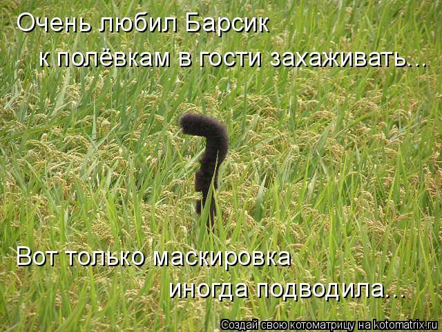 kotomatritsa_fD (640x480, 335Kb)