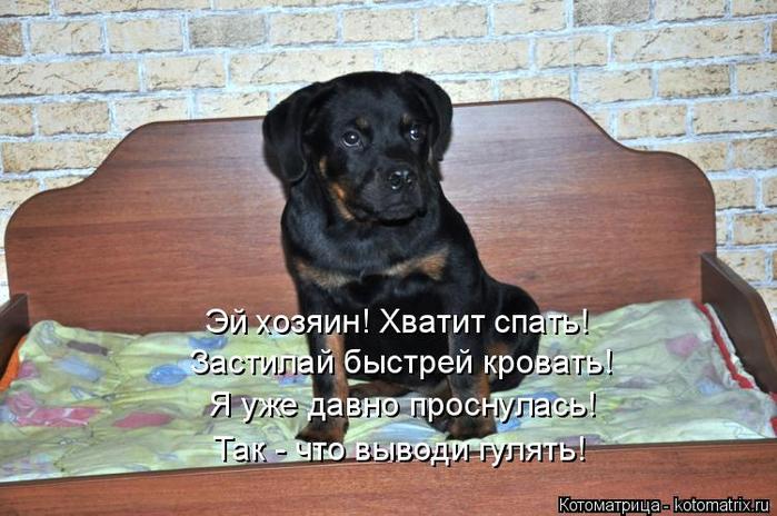 kotomatritsa_P (1) (700x464, 354Kb)