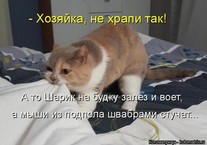 kotomatritsa_q (1) (700x491, 249Kb)