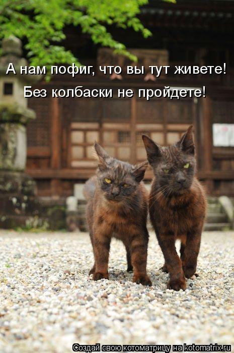 kotomatritsa_q (465x700, 250Kb)