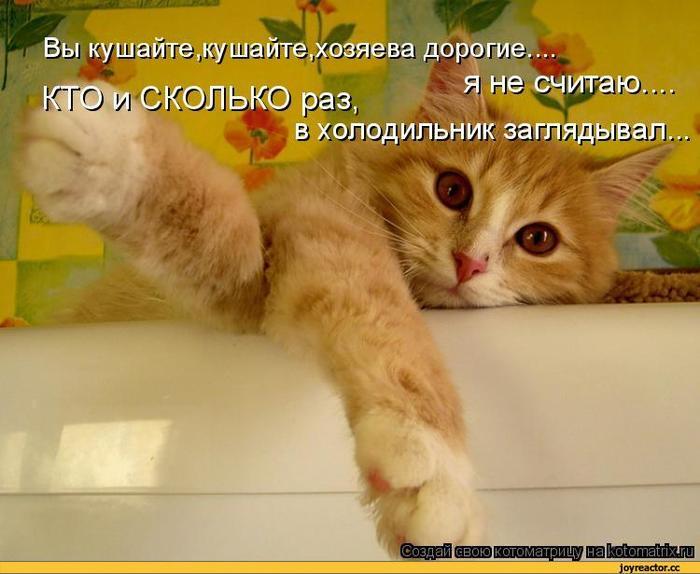 5402287_kotomatricaauto17830 (700x574, 50Kb)