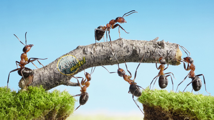 20520-miscellaneous_hard_working_ants_wallpaper (700x393, 289Kb)