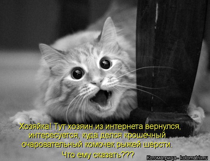kotomatritsa_Ag (700x538, 194Kb)