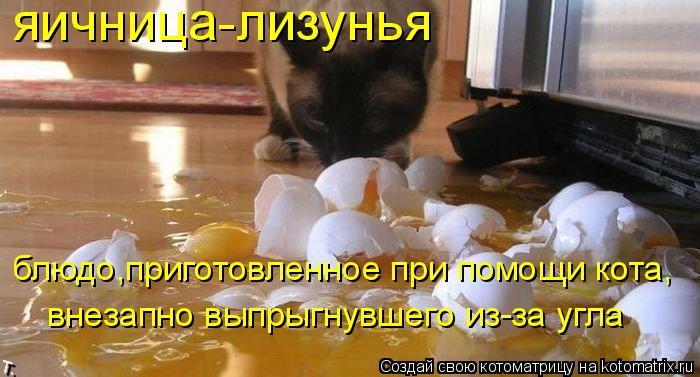kotomatritsa_d9 (700x377, 245Kb)