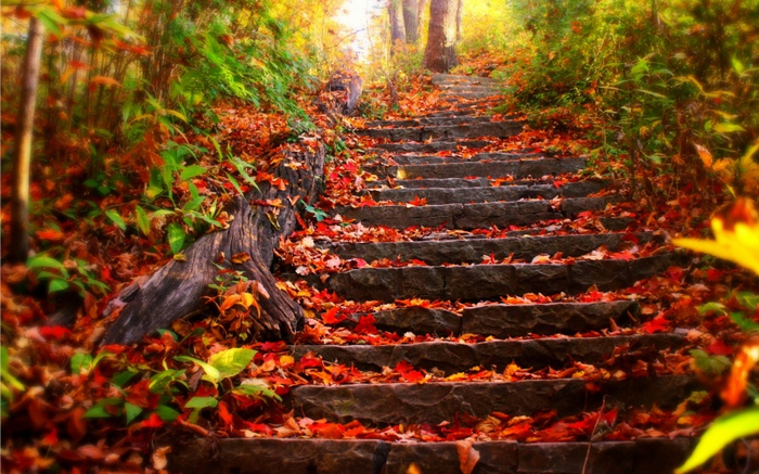 9689610-beautiful-awesome-fall-wallpaper-pictures-30-900-91eee8eac4-1484579088 (700x437, 473Kb)