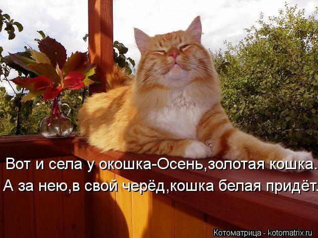 kotomatritsa__B (640x480, 298Kb)