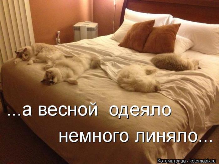 kotomatritsa_f (700x524, 323Kb)