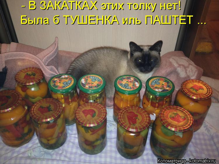 kotomatritsa_t (700x524, 395Kb)