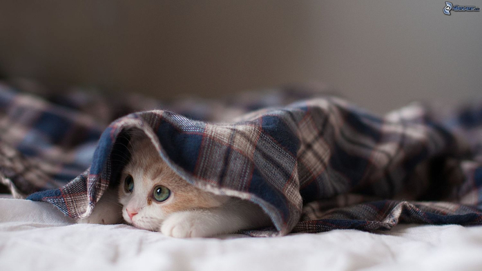 cat-under-a-blanket-158920 (700x393, 190Kb)