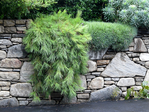 Превью Landscape-Patios-Stone-Wall-Groundcovers (700x525, 573Kb)