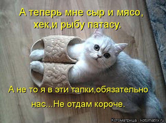 kotomatritsa_6 (640x474, 231Kb)
