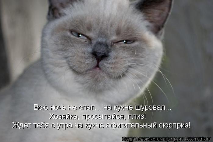 kotomatritsa_E (700x468, 189Kb)