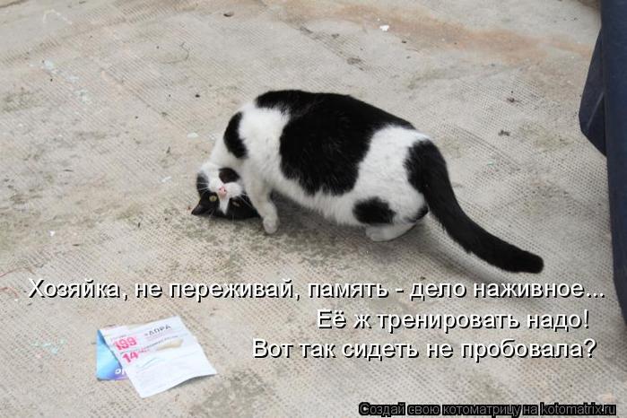 kotomatritsa_F (700x466, 282Kb)