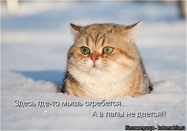 kotomatritsa_Qg (640x448, 141Kb)