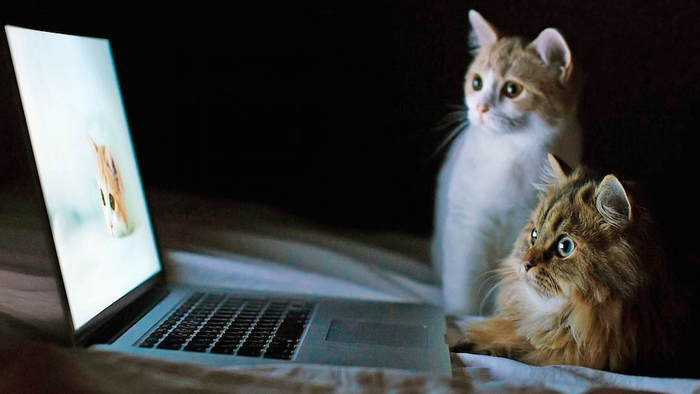 Cat-Watching-Friend-In-Laptop-Wallpaper (700x394, 205Kb)
