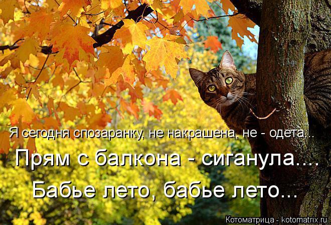 kotomatritsa_iC (660x448, 391Kb)