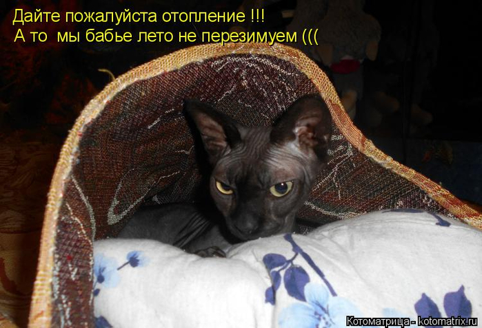 kotomatritsa_s (700x477, 320Kb)