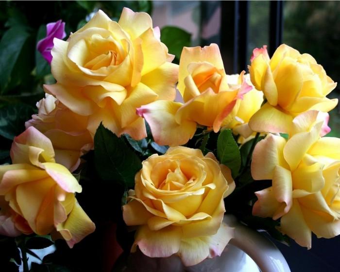 belye-rozy-foto-1-11-e1431942666960 (700x560, 87Kb)