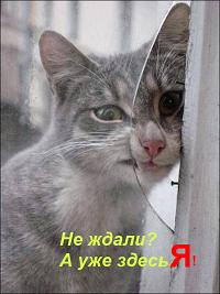 ������ ����������� ����/3509984_129872608_3509984_original (200x267, 99Kb)