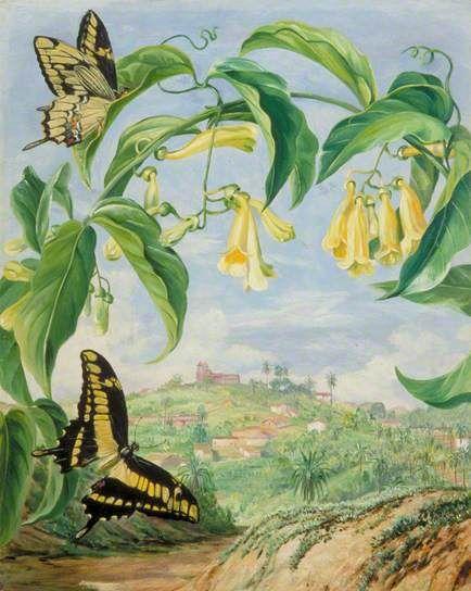 begonia (734x844, 52Kb)