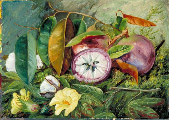 follaje-flores-y-semillas-vasos-de-algodón-y-fruta-de-star-apple-jamaica y un mil ochocientos centenar de setenta y dos (900x698, 63Kb)