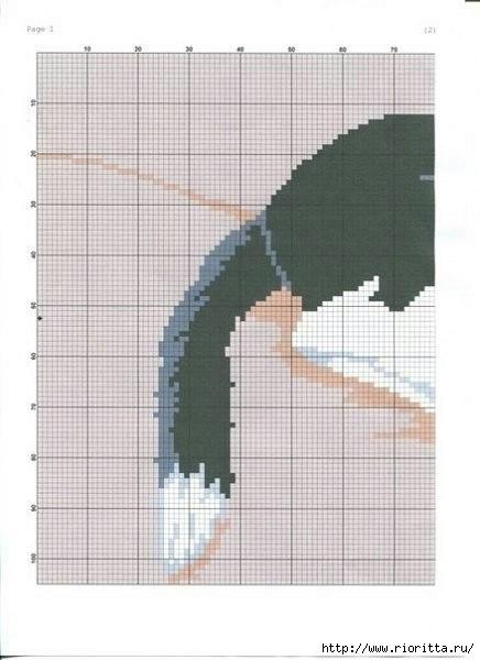 7 (1) (436x600, 106Kb)