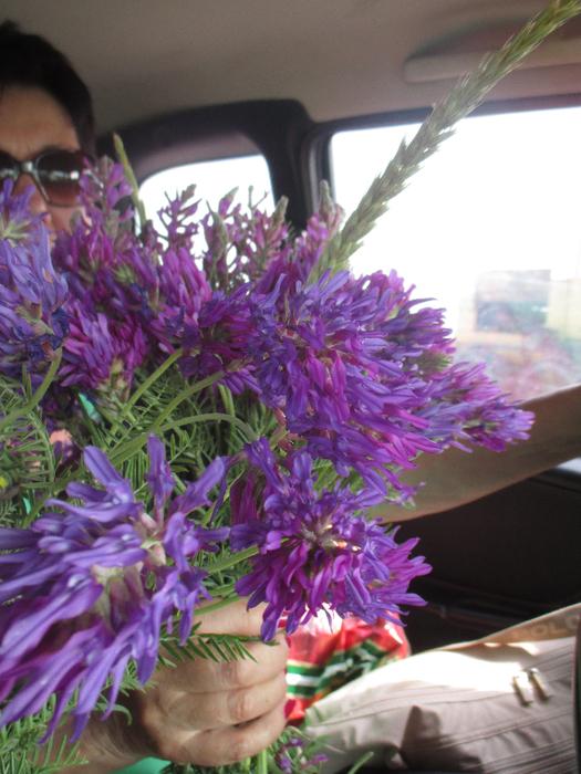 Цветы (525x700, 471Kb)